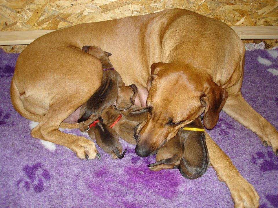Jelany Red S litter