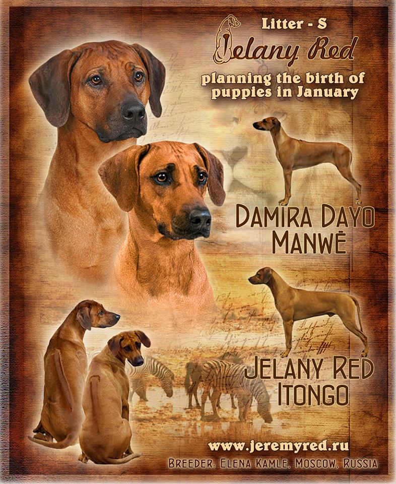 Jelany Red kennel Damira x Itongo