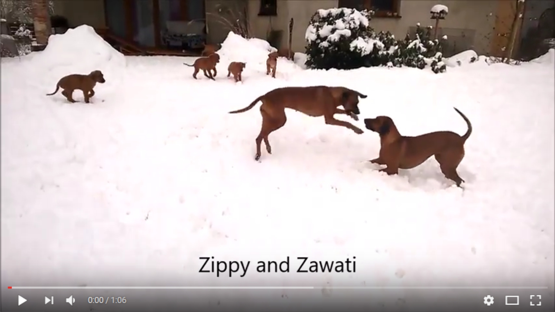 Zippy and Zawati