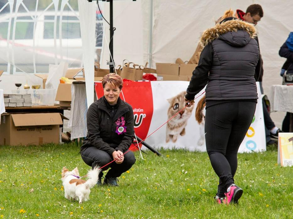 happy dog show19